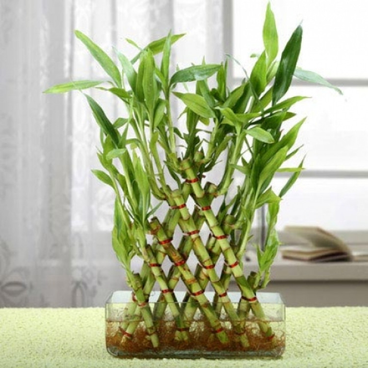5 Layer Pyramid Bamboo
